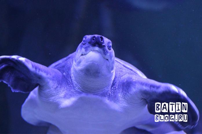 Океанариум Крокус Сити - Батин Блог