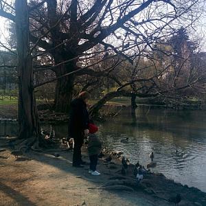 Птицы в парке Семпионе Милан 2018 - Батин Блог