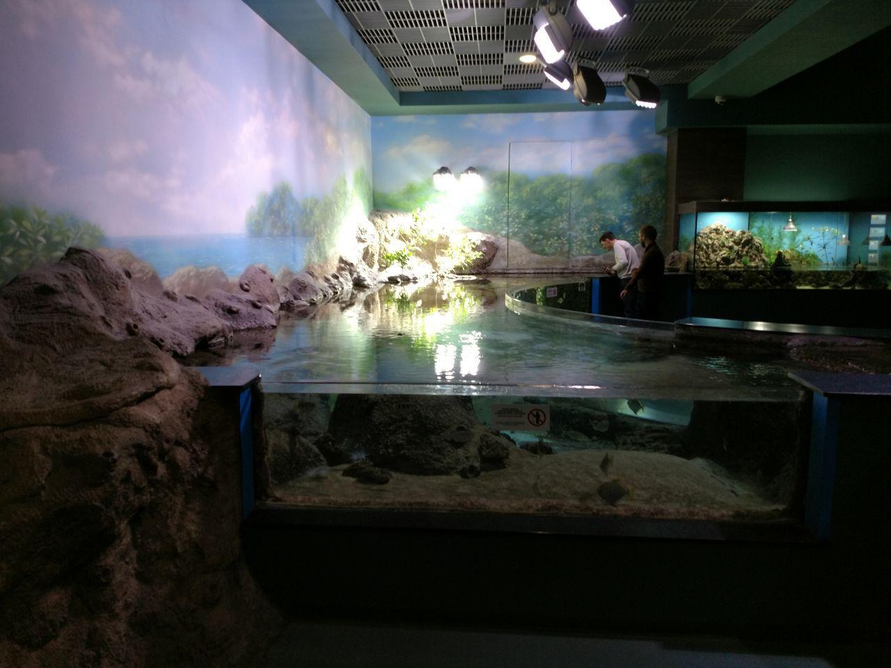 Океанариум на Внднх - Батин Блог