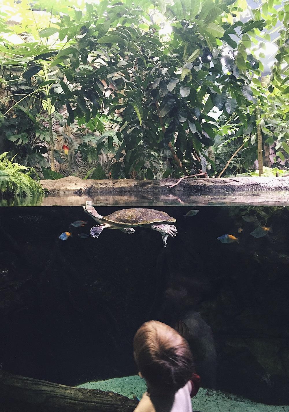 Посмотреть рыб на ВДНХ - Батин Блог