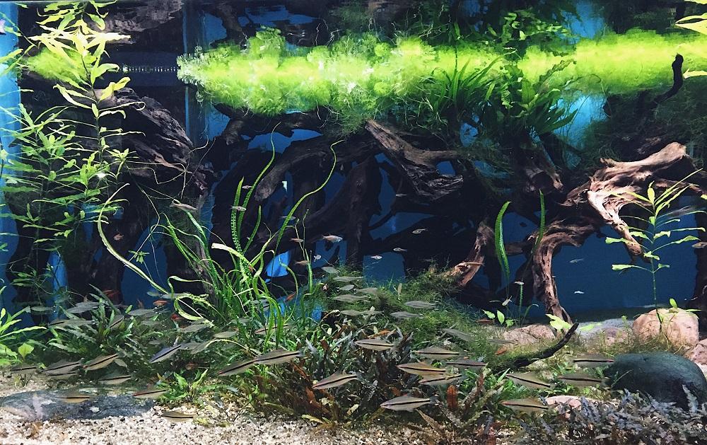 Океанариум Внднх - Батин Блог